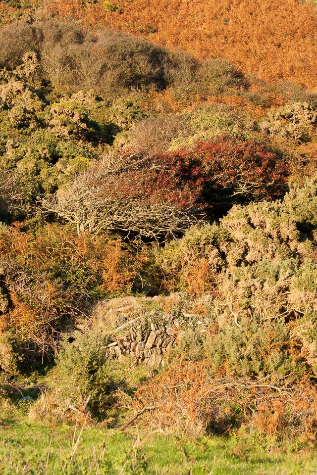 Autumn Colours on the Cliffs